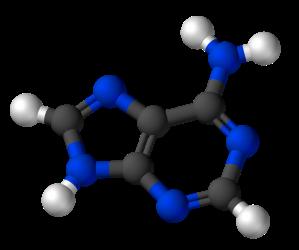800px-Adenine-3D-balls